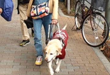 盲導犬の育成助成